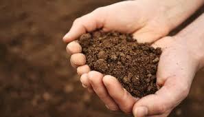 The Magic of Soil